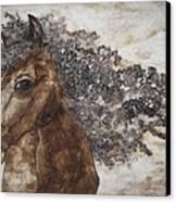 The Mane Affair Canvas Print by Bonnie Nash