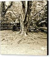 The Matriarch Canvas Print by Scott Pellegrin
