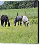 The Pasture Canvas Print by Susan Leggett