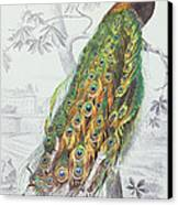 The Peacock Canvas Print by A Fournier