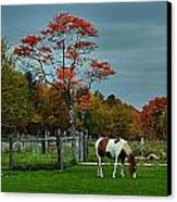 The Pinto Canvas Print by Julie Dant
