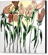The Prayer Garden Canvas Print by Anthony Falbo