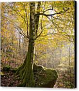 The Rock Tree Canvas Print by Sophie De Roumanie