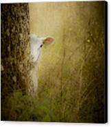 The Shy Lamb Canvas Print by Loriental Photography