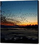 The Swarm Canvas Print by Matt Molloy