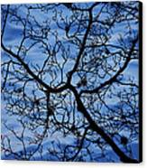 The Veins Of Time Canvas Print by Andrew Pacheco