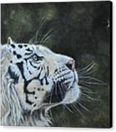 The White Tiger And The Butterfly Canvas Print by Louise Charles-Saarikoski