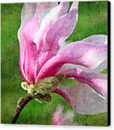 The Windblown Pink Magnolia - Flora - Tree - Spring - Garden Canvas Print by Andee Design