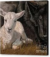 The Wolf And The Lamb Canvas Print by Sheri Gordon