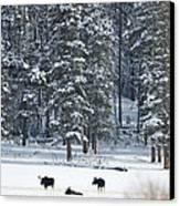 Three Bull Moose Canvas Print by Deby Dixon