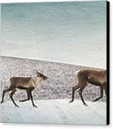 Three Caribous Canvas Print by Priska Wettstein