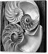 Three Chambered Nautilus In Black And White Canvas Print by Garry Gay