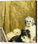 Three Dogs Canvas Print by Charles van den Eycken