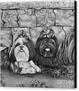 Three Little Shih Tzus Canvas Print by Lena Auxier