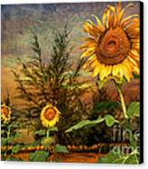 Three Sunflowers Canvas Print by Adrian Evans