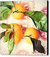 Three Tangerines Canvas Print by Lupen  Grainne