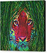 Tiger In The Grass Canvas Print by Jane Schnetlage
