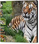 Tiger Poster 1 Canvas Print by John Hebb