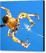 Trapeze Spider Canvas Print by Christina Rollo
