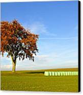 Tree And Hay Bales Canvas Print by Aged Pixel