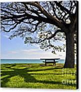 Tree Canopy Canvas Print by Gina Savage