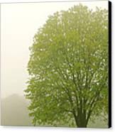 Tree In Fog Canvas Print by Elena Elisseeva