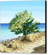 Tree On The Beach Canvas Print by Veronica Minozzi