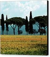 Tree Row In Tuscany Canvas Print by Heiko Koehrer-Wagner