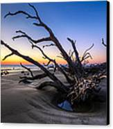 Trees At Driftwood Beach Canvas Print by Debra and Dave Vanderlaan