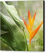 Tropical Flower Canvas Print by Natalie Kinnear