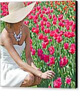 Tulip Beauty Canvas Print by Maria Dryfhout