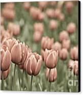 Tulip Field Canvas Print by Frank Tschakert