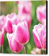 Tulip Time Canvas Print by Angela Doelling AD DESIGN Photo and PhotoArt