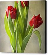 Tulipa Canvas Print by Jacky Parker