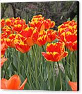 Tulips From Brooklyn Canvas Print by John Telfer