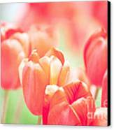 Tulips In The Sun Canvas Print by Kay Pickens