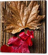 Two Leafs  Canvas Print by Garry Gay