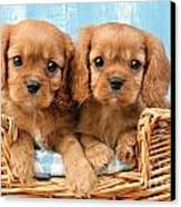 Two Puppies In Woven Basket Dp709 Canvas Print by Greg Cuddiford