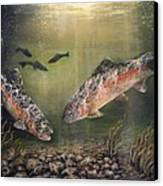 Two Rainbow Trout Canvas Print by Donna Tucker