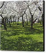 Under The Cherry Blossoms - Washington Dc. Canvas Print by Mike McGlothlen
