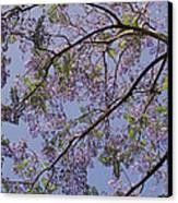 Under The Jacaranda Tree Canvas Print by Rona Black