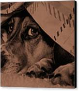 Undercover Hound Canvas Print by Paul Wash
