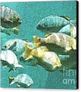 Underwater Fish Swimming By Canvas Print by Artist and Photographer Laura Wrede