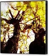 Untitled-twin Trees Canvas Print by Juliann Sweet