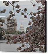 Us Capitol - Cherry Blossoms - Washington Dc - 01132 Canvas Print by DC Photographer