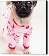 Valentine's Day - Adorable Pug Puppy In Pajamas Canvas Print by Edward Fielding