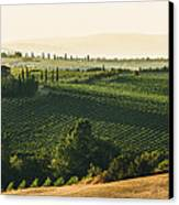 Vineyard From Above Canvas Print by Clint Brewer