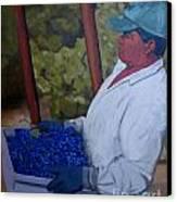 Vineyard Harvest IIi Canvas Print by Donna Schaffer