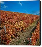 Vineyard In Negotin. Serbia Canvas Print by Juan Carlos Ferro Duque