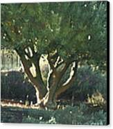 Vineyard Olive Canvas Print by Artist and Photographer Laura Wrede